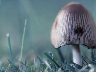 обои Ядовитый гриб фото