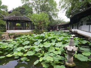 обои Заросший пруд в Китае фото