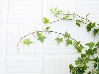 обои Зелёные побеги на стене фото