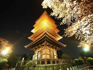обои Достопримечательности района сакура (Япония) фото
