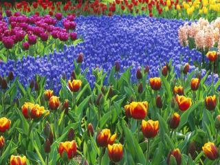 обои Цветочное поле фото