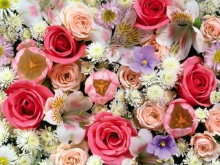 обои Цветочный бум фото
