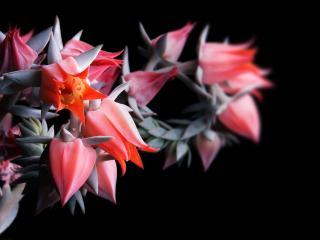 обои Цветы на тёмном фоне фото