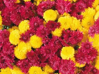 обои Яркие цветы фото