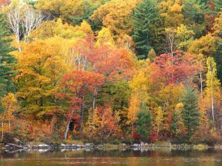обои Осень наступила фото