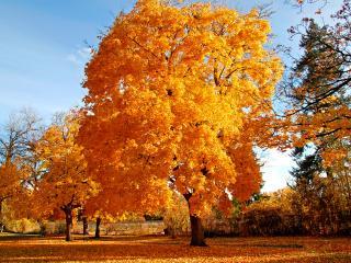 обои Золотые красавицы-деревья вдоль дороги фото