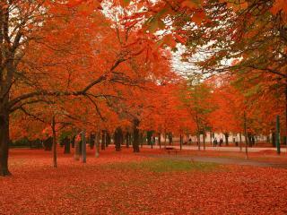 обои Багряная осень пришла в парк фото