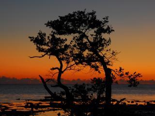 обои Два дерева посреди пустынных топей фото