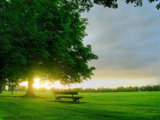 обои Романтическая скамейка у векового древа смотрит на лес фото