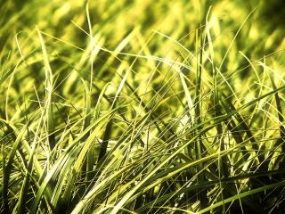 обои Солнечное поле, полное зелёной травы фото
