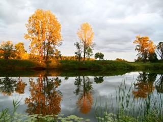 обои Осенний пруд с кувшинками фото