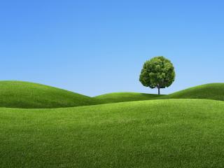 обои Дерево среди пустынных холмов фото