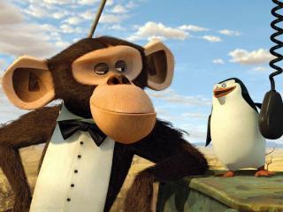 обои Пингвин с Мадагаскара фото