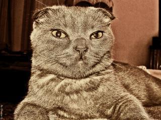 обои Pussy cat фото