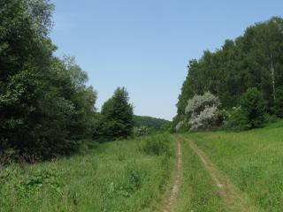 обои Сельская дорога фото