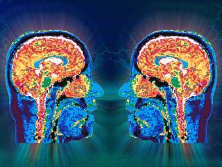 обои Исследование головного мозга фото