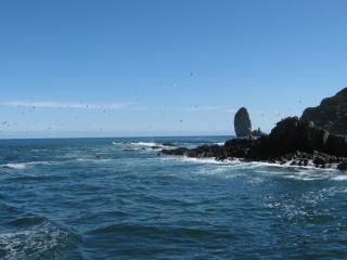 обои Океан действительно Тихий фото