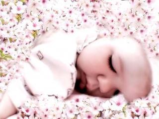 обои Младенец, спящий в цветах фото