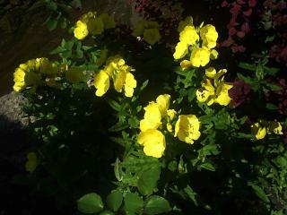обои Прекрасный желтые цветы в Анапе фото