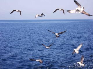 обои Анапские чайки - путь по чёрному морю фото