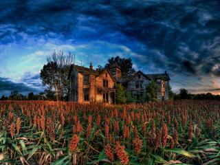 обои Дом в кукурузном поле фото