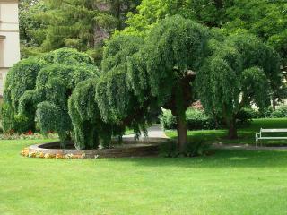 обои Два дерева фото