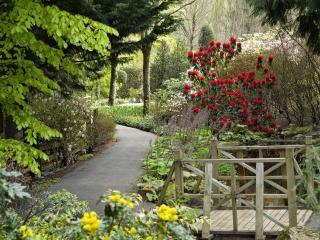 обои Райский сад фото