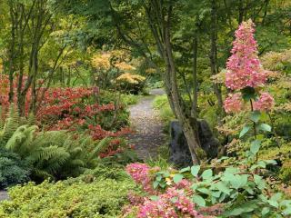 обои Тропинка в цветущем заповеднике фото