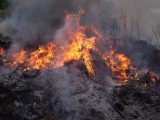 обои Горящий лес, усеенный в дыму и пепле фото