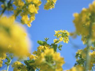 обои Желтое дерево фото