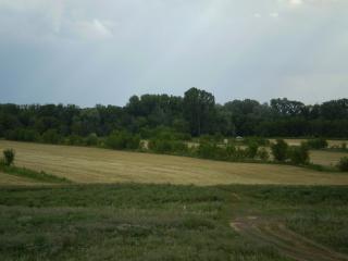обои Пшеничное поле фото