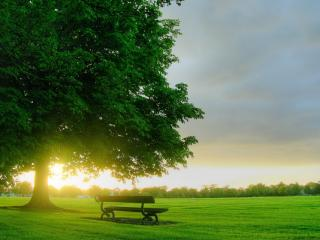 обои Вечрний закат в парке фото