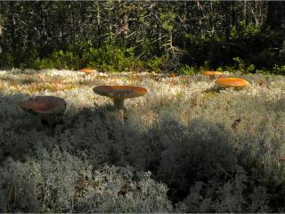 обои Гигантские грибы фото