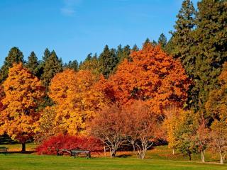 обои Осень золотая фото