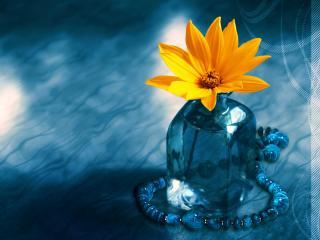 обои Живой цветок в холодной, синей бутылке на мёртвом фоне фото