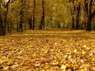 обои Осенний парк фото