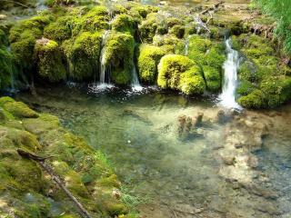 обои Летний лесной ручей, с небольшими водопадами фото