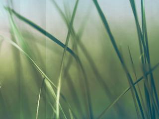 обои Красивые макро-обои зарослей травы фото