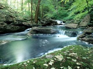обои Чистый и освежающий летний ручей, в лесной чаще фото