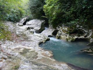 обои Скоростной ручей, в летнем лесу фото
