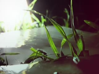 обои Трава, проросшая через талый лёд фото