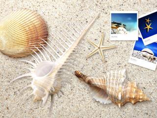 обои Ракушки и фотографии на сером песке фото