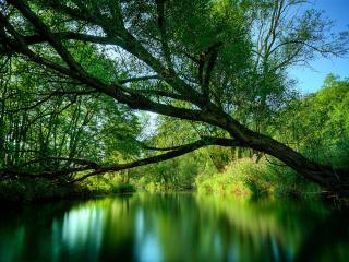 обои Река и деревья фото