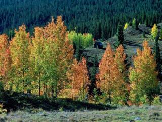 обои Красивые разноцветные осенние деревья фото