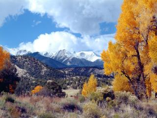 обои Желтые деревья на фоне снежных гор фото