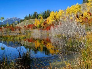 обои Осень у воды фото