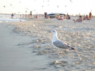 обои для рабочего стола: Чайка на пляже