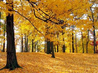 обои Золотистая пора года в лесу фото