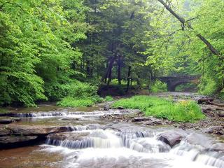 обои Весенний ручей, в лесу у зеленых деревьев фото