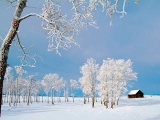 обои Зимние леса фото